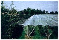Filets de protection contre la grêle